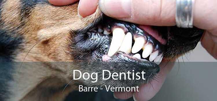Dog Dentist Barre - Vermont