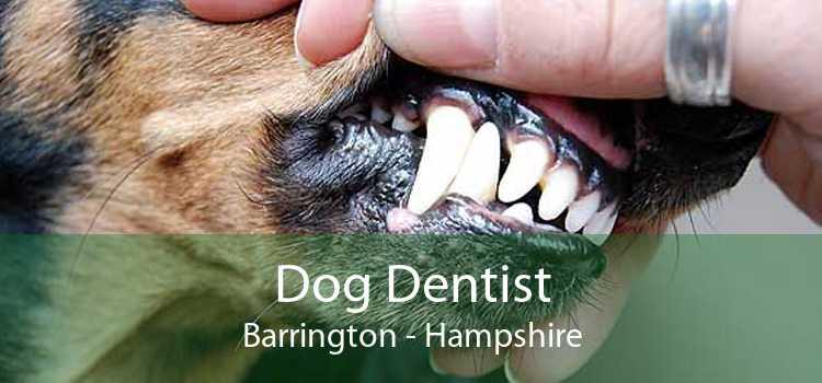 Dog Dentist Barrington - Hampshire