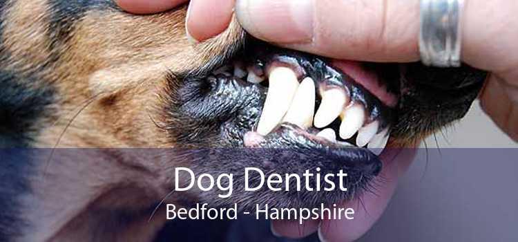 Dog Dentist Bedford - Hampshire