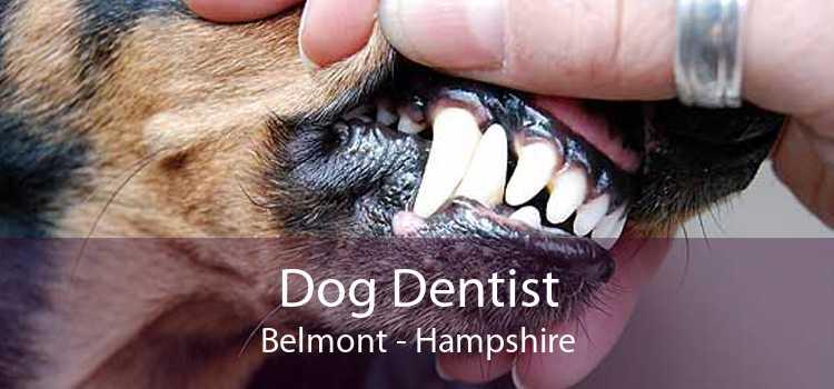 Dog Dentist Belmont - Hampshire