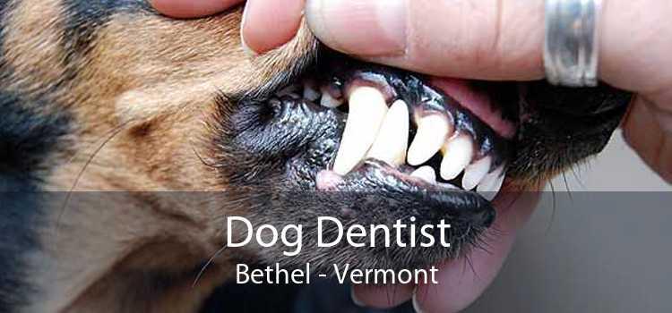 Dog Dentist Bethel - Vermont