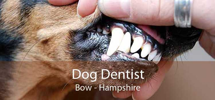 Dog Dentist Bow - Hampshire