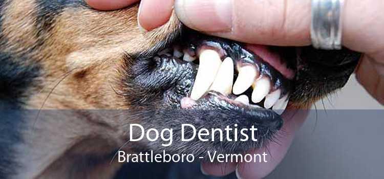Dog Dentist Brattleboro - Vermont