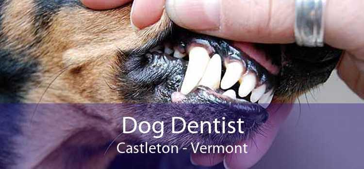 Dog Dentist Castleton - Vermont