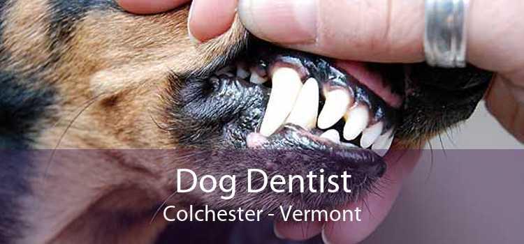 Dog Dentist Colchester - Vermont
