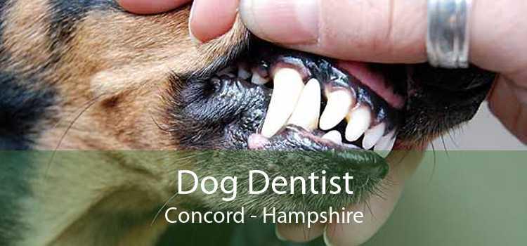 Dog Dentist Concord - Hampshire