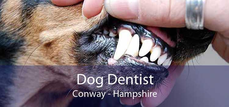 Dog Dentist Conway - Hampshire