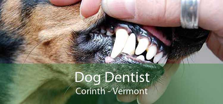 Dog Dentist Corinth - Vermont
