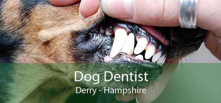 Dog Dentist Derry - Hampshire
