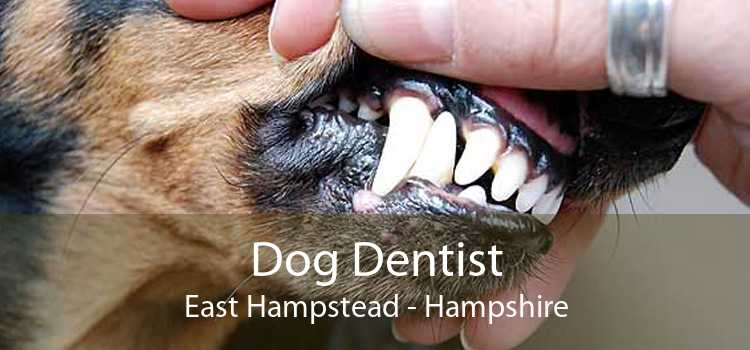 Dog Dentist East Hampstead - Hampshire