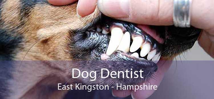Dog Dentist East Kingston - Hampshire