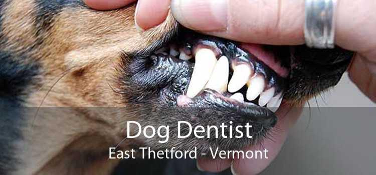 Dog Dentist East Thetford - Vermont