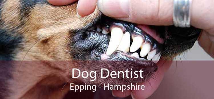 Dog Dentist Epping - Hampshire