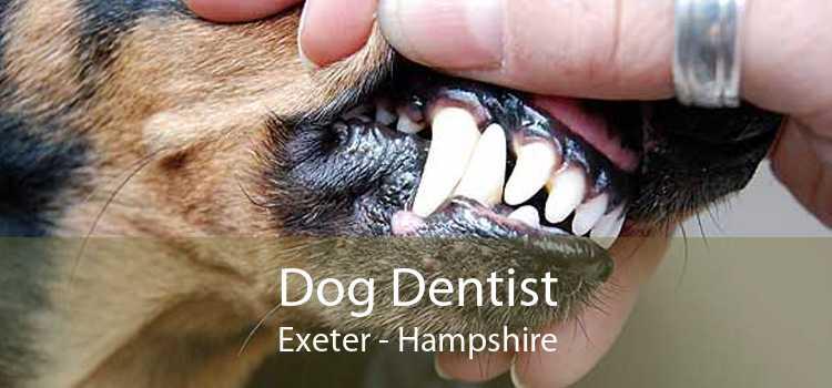 Dog Dentist Exeter - Hampshire