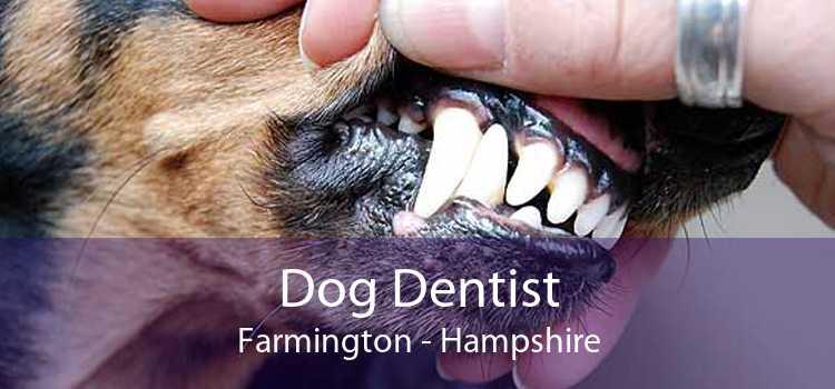 Dog Dentist Farmington - Hampshire