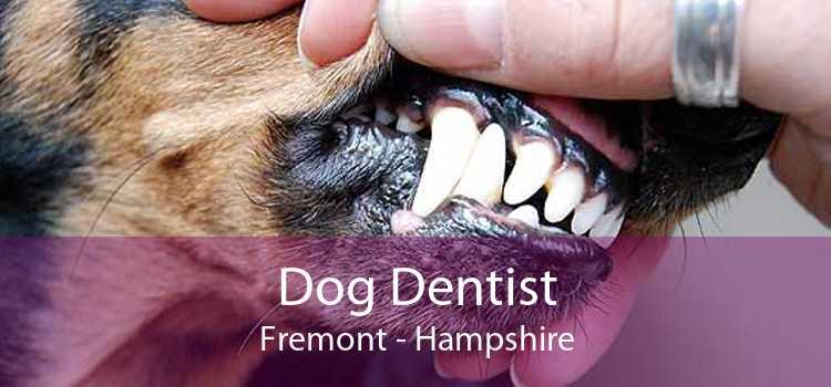 Dog Dentist Fremont - Hampshire