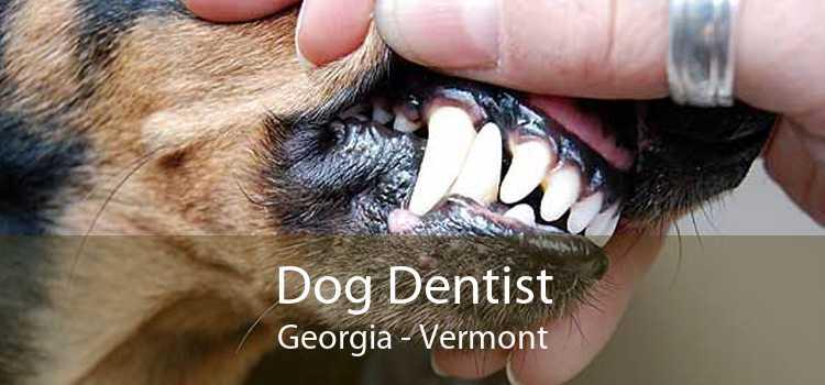 Dog Dentist Georgia - Vermont