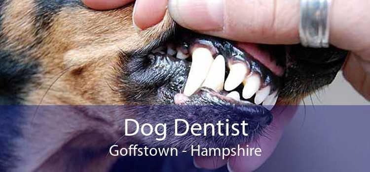 Dog Dentist Goffstown - Hampshire