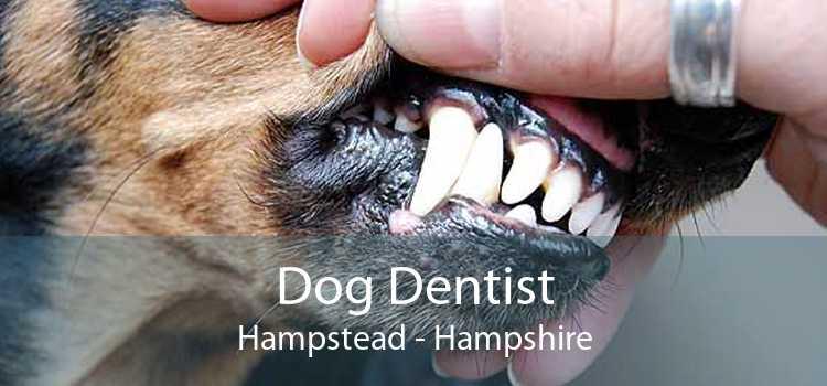 Dog Dentist Hampstead - Hampshire