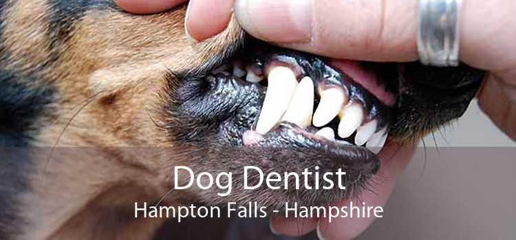 Dog Dentist Hampton Falls - Hampshire