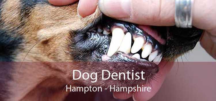 Dog Dentist Hampton - Hampshire