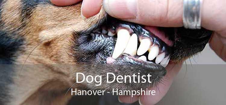 Dog Dentist Hanover - Hampshire
