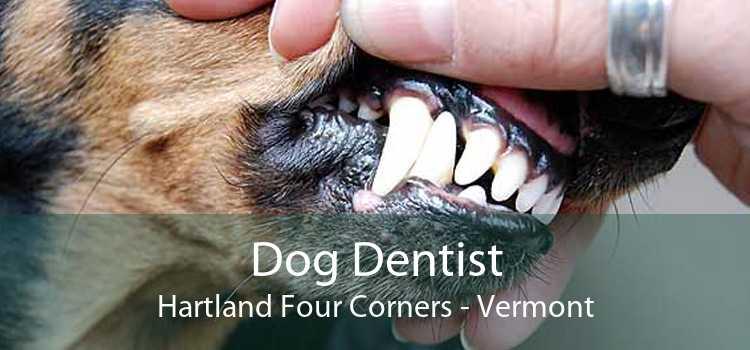 Dog Dentist Hartland Four Corners - Vermont
