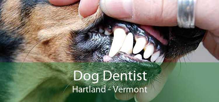 Dog Dentist Hartland - Vermont