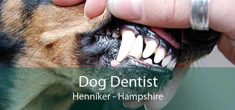 Dog Dentist Henniker - Hampshire