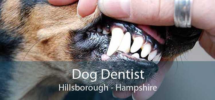 Dog Dentist Hillsborough - Hampshire