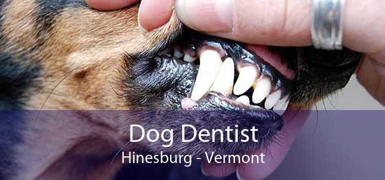 Dog Dentist Hinesburg - Vermont