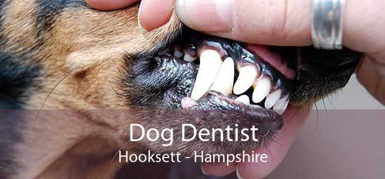Dog Dentist Hooksett - Hampshire