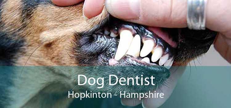 Dog Dentist Hopkinton - Hampshire