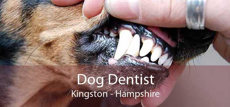 Dog Dentist Kingston - Hampshire