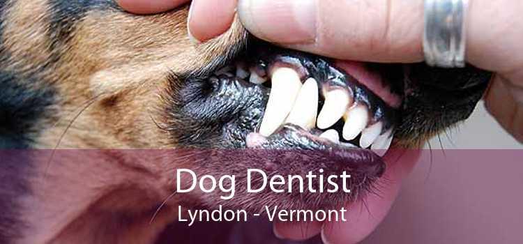 Dog Dentist Lyndon - Vermont