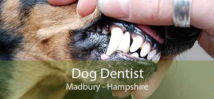 Dog Dentist Madbury - Hampshire