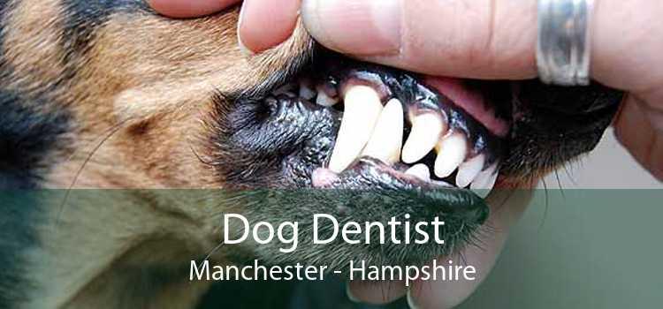 Dog Dentist Manchester - Hampshire