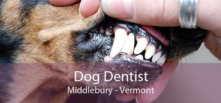 Dog Dentist Middlebury - Vermont