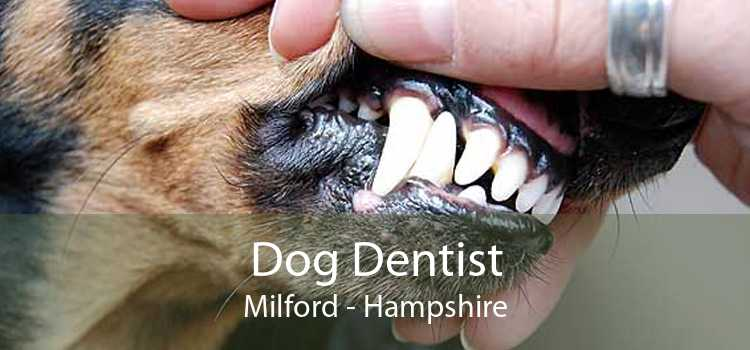 Dog Dentist Milford - Hampshire