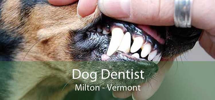 Dog Dentist Milton - Vermont