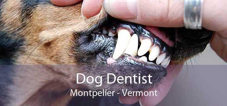 Dog Dentist Montpelier - Vermont