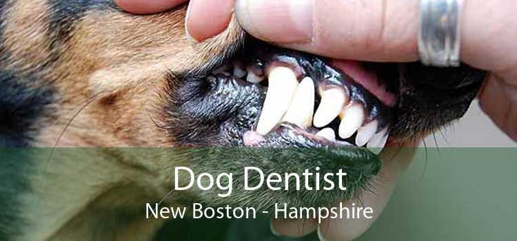 Dog Dentist New Boston - Hampshire