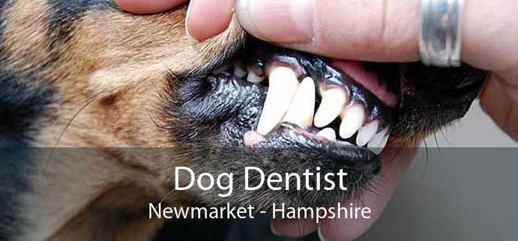 Dog Dentist Newmarket - Hampshire