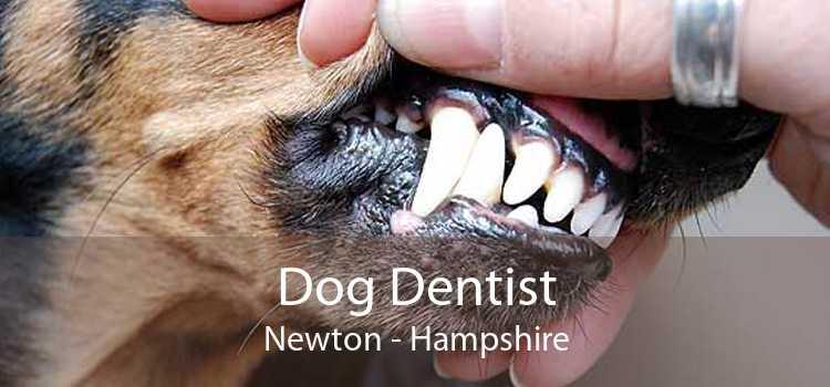 Dog Dentist Newton - Hampshire