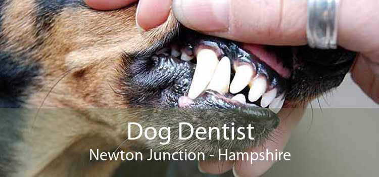 Dog Dentist Newton Junction - Hampshire