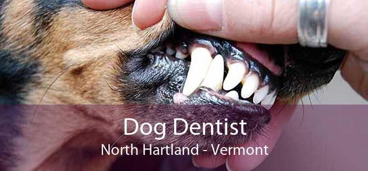 Dog Dentist North Hartland - Vermont