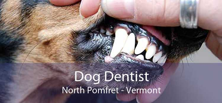 Dog Dentist North Pomfret - Vermont