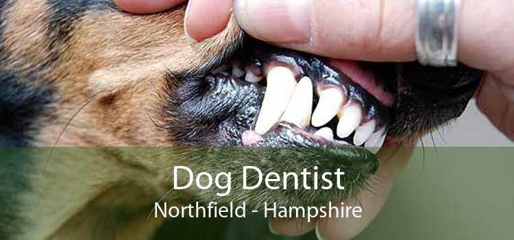 Dog Dentist Northfield - Hampshire