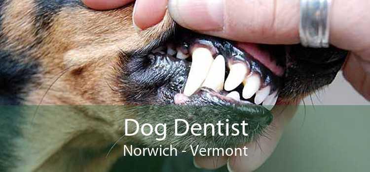 Dog Dentist Norwich - Vermont