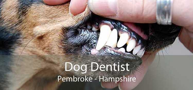 Dog Dentist Pembroke - Hampshire